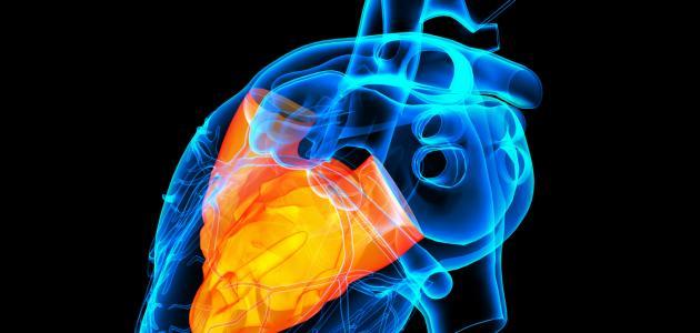 تفسير حلم دقات القلب السريعة في المنام لابن سيرين موسوعة المدير