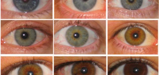 كيف افتح لون عيوني موقع مصادر