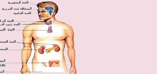 بحث عن جهاز الغدد الصماء والتكاثر موقع مصادر