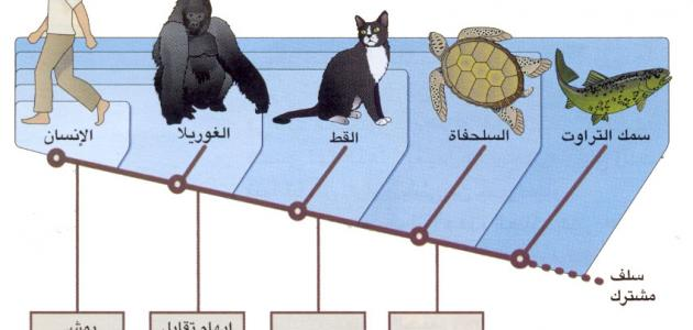 جهود العلماء في تصنيف الحيوانات موقع مصادر