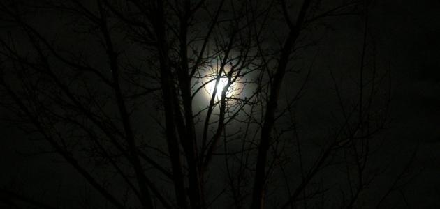 حكم عن الليل
