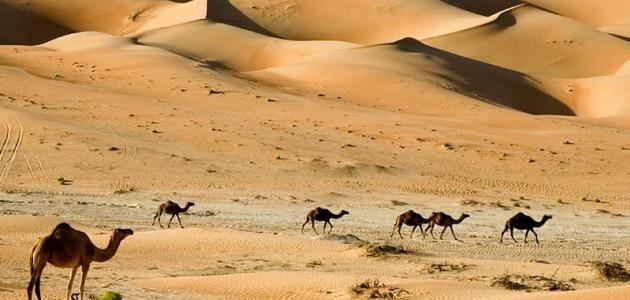 بحث عن البيئة الصحراوية موقع مصادر