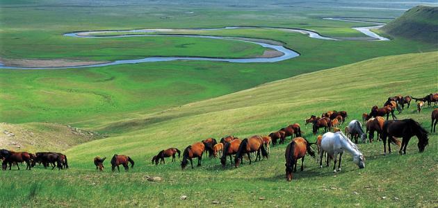 أين تقع منغوليا موقع مصادر