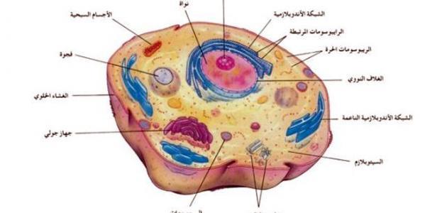 مكونات الخلية موقع مصادر