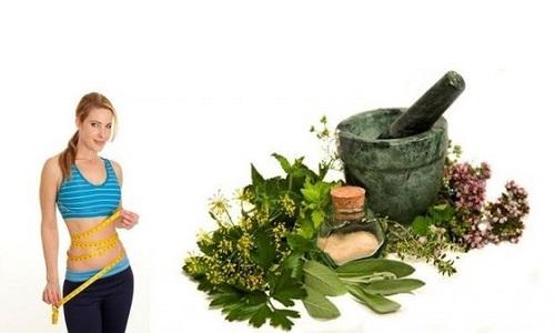 أعشاب تساعد في رحلة إنقاص الوزن