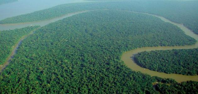 نهر الأمازون ويكيبيديا 12