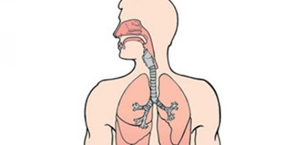 كيف نحافظ على سلامة الجهاز التنفسي