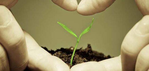 بحث حول تأثير العوامل المناخية على إنتاج الكتلة الحيوية