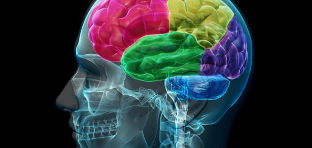 اختبار عمر الدماغ