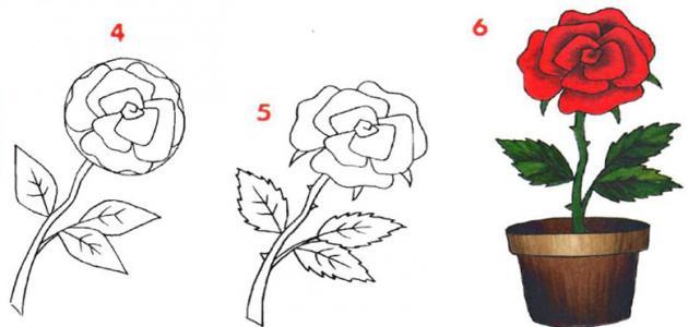 طريقة رسم الوردة
