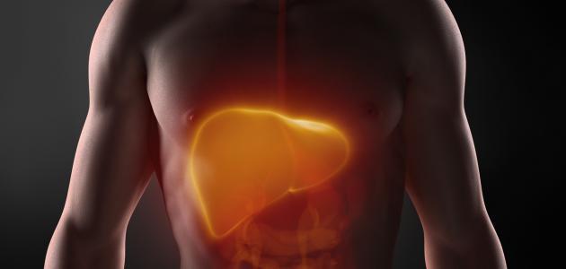 أين يقع الكبد في جسم الإنسان موقع مصادر